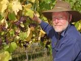 Cape Bernier Vineyard – ProducerProfile