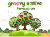Creamy Quinoa Pudding Recipe and Groovy Native Permaculture Sponsor Profile