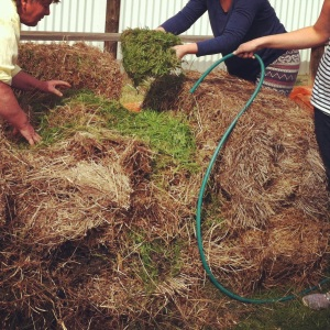 Preparing the hot compost heap for next Sunday's demonstration.