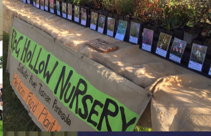 Frog Hollow nursery