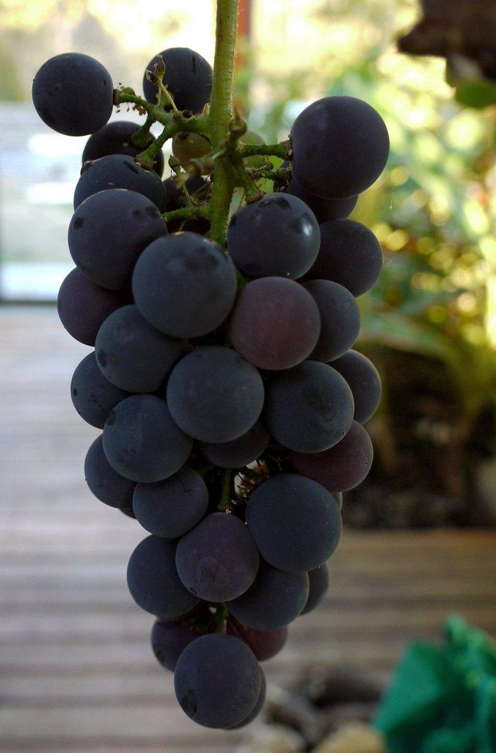 grape-cascade2.JPG